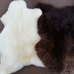 Lamb and Sheep Skins